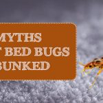9 Common Myths about Bedbugs, Debunked