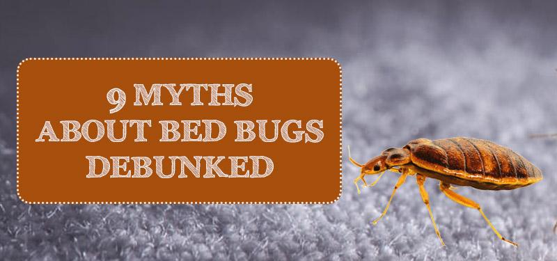 bedbug-myths-debunked