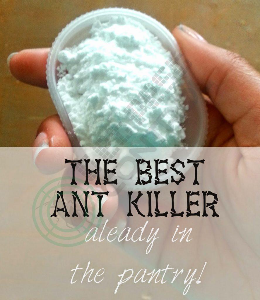 get-ant-pest-control-pix