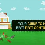 Your Guide to Hiring the Best Pest Control Service