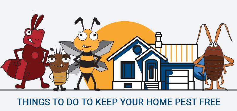 pest-free-home
