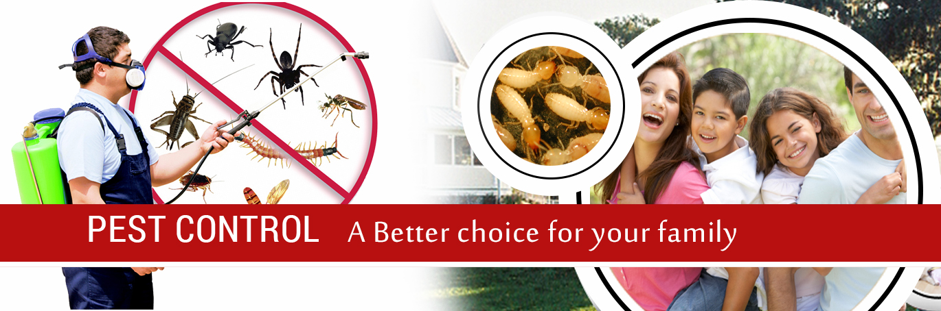 Home remedie sfor pests control