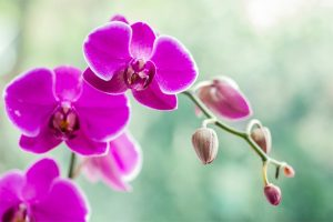 aluminium and banana to save orchids from pests