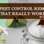 8 Homemade Pest Control Remedies to Ward of Pests from Home