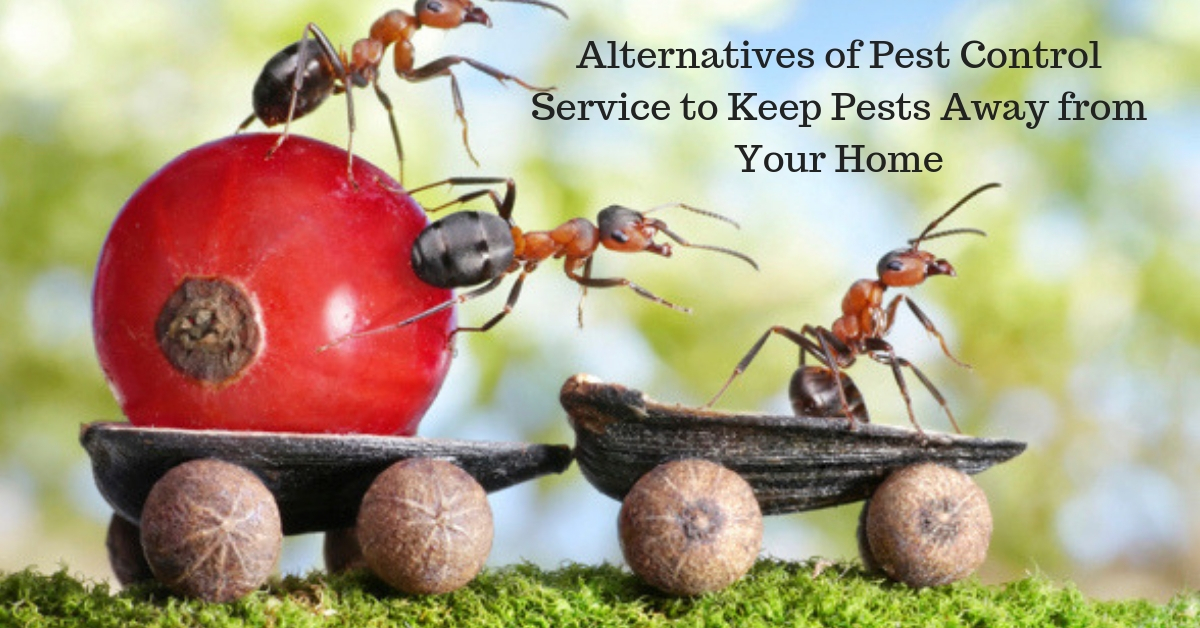 Alternatives of Pest Control Service to Keep Pests Away from Your Home