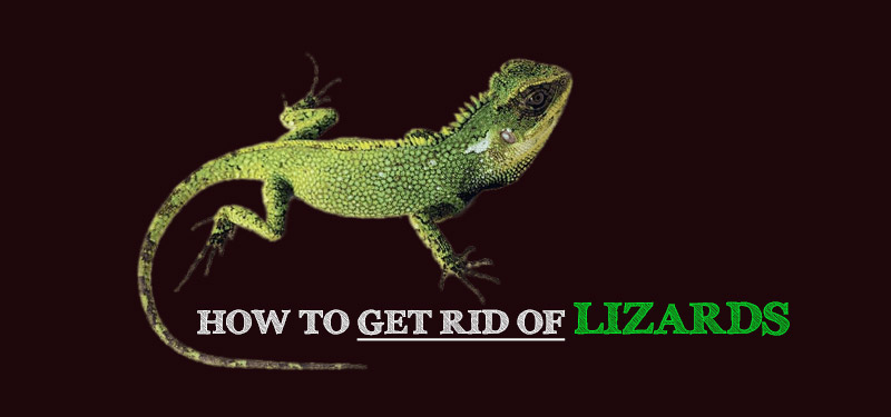 how-to-get-rid-of-lizards