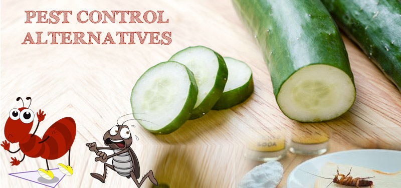 pest-control-alternatives