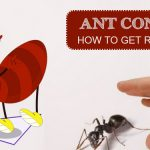 How to Get Rid of Ants? DIY Ant Control