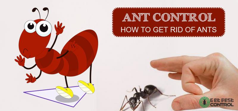 ants-control