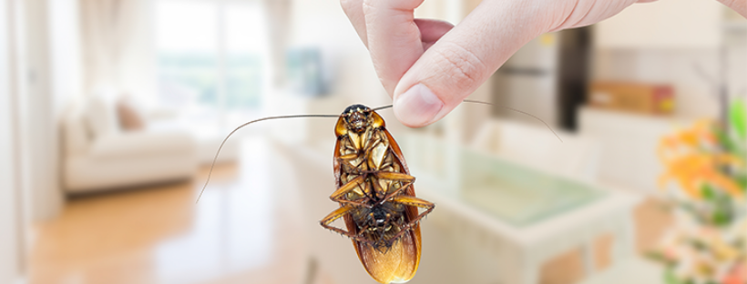 Tips and tricks for the best Pest Control