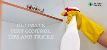 pest-control-tips-and-tricks