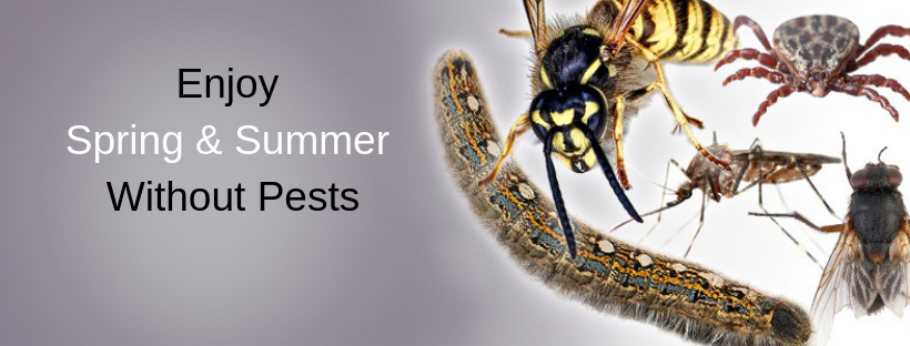 Enjoy Spring & Summer Without Pests