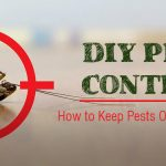 Do It Yourself Pest Control Ideas and Tips