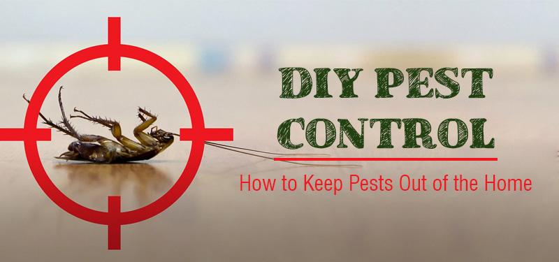 diy-pest-control