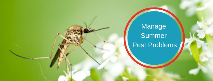 Manage Summer Pest Problems