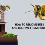 How to Get Rid of Bees or Bee Hive from Home?