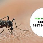 Pest Management in Summer - How to Manage Summer Pest Problems?