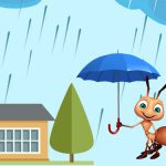 How to Get Rid of Common Monsoon Pests