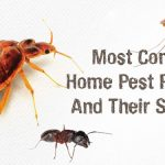 Common Pest Problems Faced by Homeowners and Their Solutions