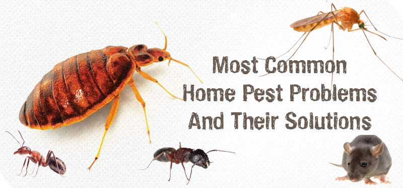 common-pest-problems-and-solution