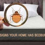 4 Signs Your Home Has Bedbugs