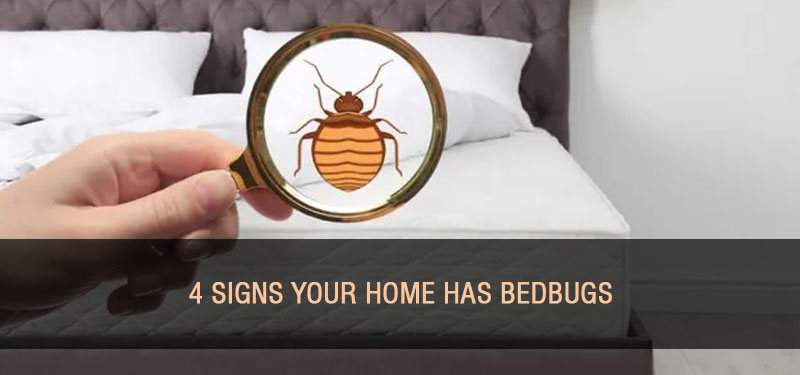 signs-of-bedbugs