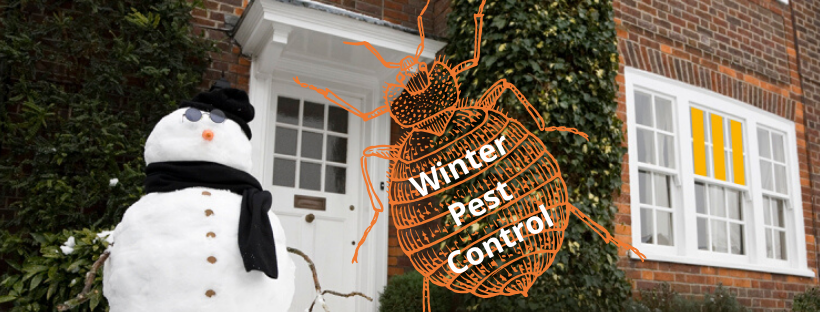 Winter Pest Control