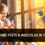 Where Do Some Pests & Insects Go in the Winter?