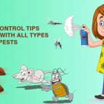 DIY Pest Control Tips for Dealing with All Types of Pests at Home or Workplace