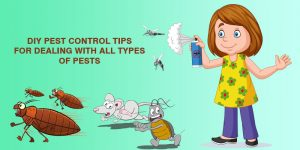 diy-pest-control-tips-for-all-types-of-pests