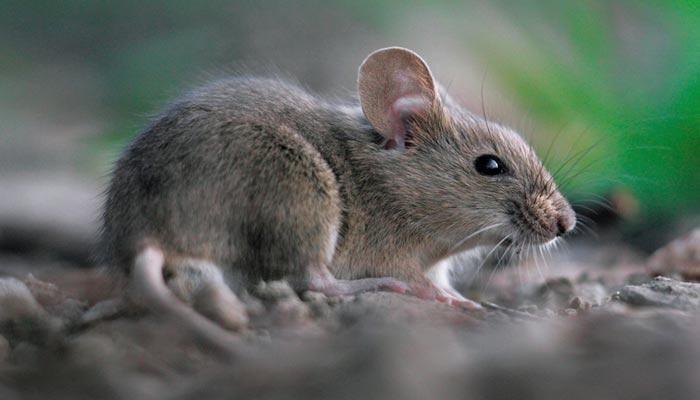 mice-control