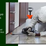 Say Goodbye to Termite with Professional Termite Pest Control