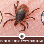 Tips to keep ticks away from your property