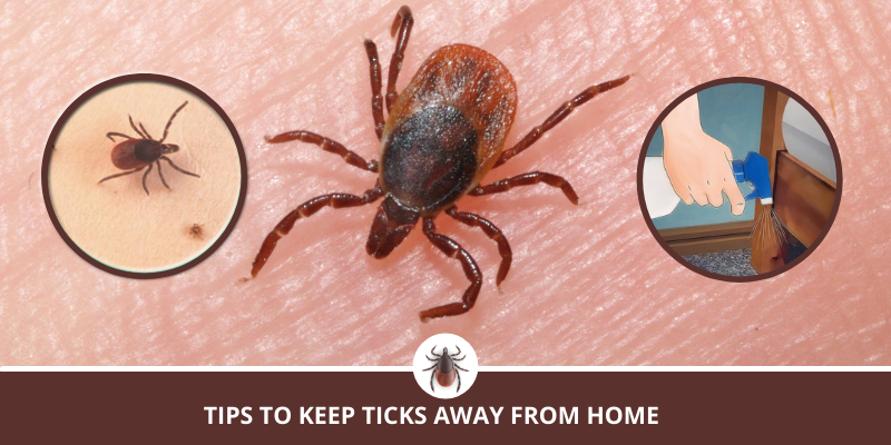 Tips to keep ticks away from Home