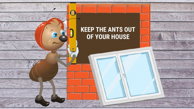 Keep the Ants Out of Your House