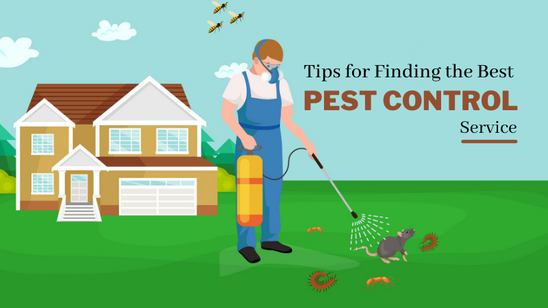 Tips for Finding the Best Pest Control Service - Get Pest Control