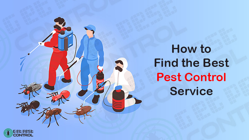 Tips for Finding the Best Pest Control Service