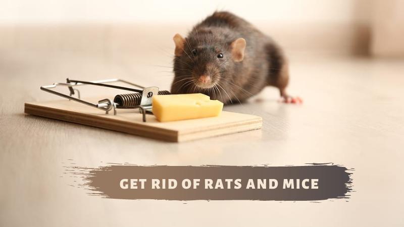 Guaranteed Ways to Get Rid of Rats and Mice
