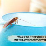 Ways to keep cockroach infestation out of the house