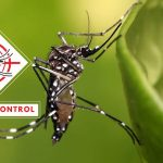 Monsoon Tips to Prevent Diseases like Malaria and Dengue